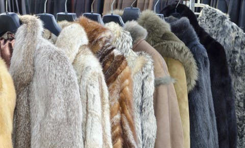 025a4eff4528 UK Man Busted Selling Fur Coats From Endangered Species
