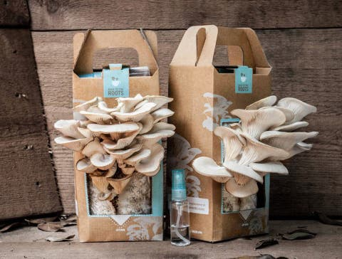 Did you know you can grow mushrooms in coffee grounds?