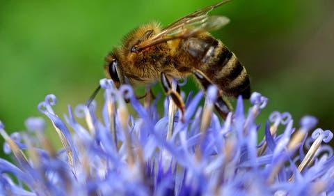 """Résultat de recherche d'images pour """"abeilles sulfator petition"""""""